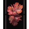 查看MysticBronze中的三星GalaxyZFlip5G手机